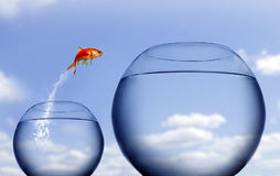 guldfiskbanhoppningen ut water Royaltyfri Bild