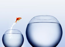 guldfiskbanhoppningen ut water Arkivfoton