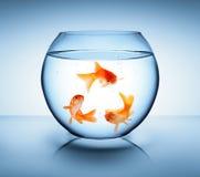 Guldfisken återanvänder in begrepp arkivbild