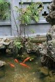 Guldfisken simmar i ett damm i en buddistisk tempel i Hanoi (Vietnam) royaltyfri foto