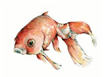 guldfiskillustration Arkivbilder