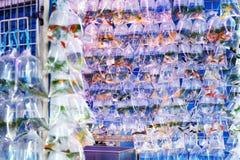 Guldfiskmarknad i Hong Kong Royaltyfria Foton