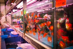 Guldfiskmarknaden i Hong Kong Royaltyfri Foto