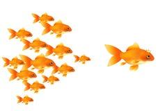 guldfiskvektor vektor illustrationer