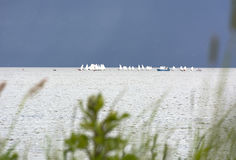 Gulf coast, boats with white sails in the sea on the horizon Stock Photography