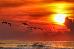 Gulf Coast Sunrise royalty free stock images