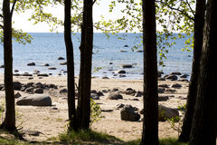 Gulf of Finland. Landscape a beach gulf of Finland Royalty Free Stock Photos
