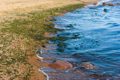 Gulf of Finland coastline. Fragment in early autumn Stock Photography