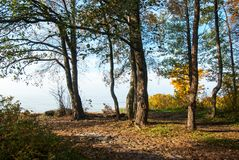 The Gulf of Finland coastline in autumn royalty free stock photo