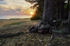 Gulf of Finland at sunset Stock Image