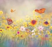 Butterflies in a meadow. Gulf Fritillary butterflies in a meadow royalty free stock photos