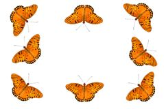 Gulf Fritillary Butterfly Background Royalty Free Stock Image