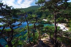The gulf among the pines. Telâkovskogo Bay where pine trees grow on bare rocks, Primorsky Krai, Russia Royalty Free Stock Image
