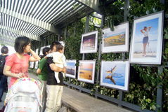 The gulf of shenzhen photography exhibition, in china Royalty Free Stock Image