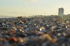 Gulf Shores, AL. Photo of seashells down by the beach at gulf shores stock photos