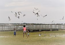 Gulfport, Florida, April 2018 African American kids are feeding and playing with seagulls. During a weekend on a cloudy day royalty free stock images