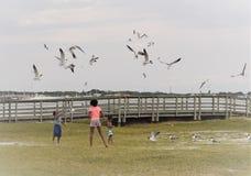 Gulfport, Florida, em abril de 2018 crianças afro-americanos é de alimentação e de jogo com gaivotas Imagens de Stock Royalty Free