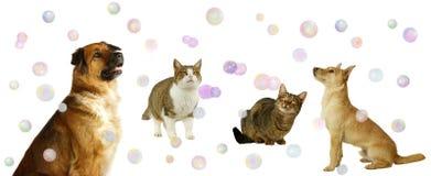 gulgocze szczęśliwych kotów psy Zdjęcia Stock