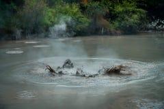 Gulgotać Borowinowego laszowanie Wodorowego siarczka gaz Geotermiczna aktywność w Waitapu, Nowa Zelandia Obraz Royalty Free