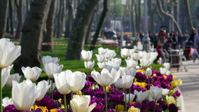 Gulhane park in Istanbul stock video