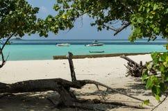 "GULHI海岛,马尔代夫†""2017年11月17日:在马尔代夫的美丽的海滩有老树、白色沙子和潜水者的蓝色印地安人的 库存图片"