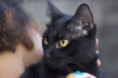Gulingögon av den svarta katten på kvinnas skuldra Arkivfoto