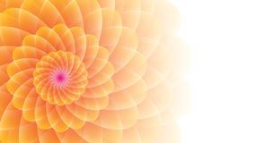 Guling-apelsin blomma på en wightbakgrund Arkivfoton