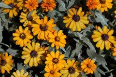 Guling av blommor Arkivbild