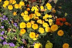 Guling blommar i parkera Royaltyfri Foto