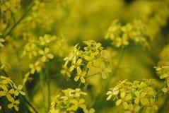 Guling blommar i tr?dg?rden royaltyfri fotografi