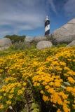 Guling blommar med fyren i bakgrunden Arkivbild