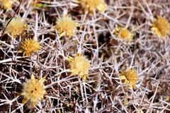 Guling blommar med taggar Arkivfoto