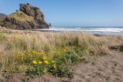 Guling blommar på den Piha stranden Arkivfoto
