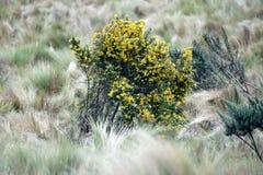 Guling blommar på en buske arkivbild