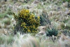 Guling blommar på en buske royaltyfria foton