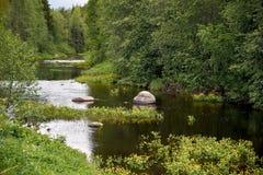 Guling blommar på en skogflod Arkivbild