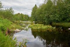 Guling blommar på en skogflod Royaltyfria Foton