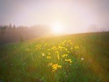 Guling blommar på grön äng i berg royaltyfri fotografi