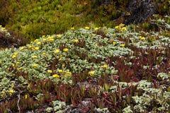 Guling blommar på gröna och röda isväxter Royaltyfri Fotografi