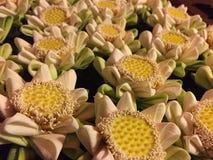 Guling blommar på vattnet royaltyfri bild