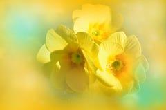 Guling blommar primulor arkivfoton