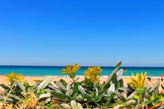Guling blommar vid Coral Sea Fotografering för Bildbyråer