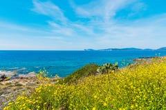 Guling blommar vid havet Royaltyfria Foton