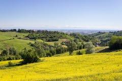 Guling färgar i Monferrato kullar Piedmont Italien på en vårmorgon Royaltyfri Foto