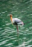 Guling fakturerad Stork royaltyfri bild