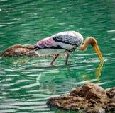 Guling fakturerad Stork royaltyfri fotografi