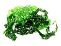 Guling-gräsplan alger Fotografering för Bildbyråer