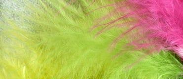 Guling-gräsplan-rosa färger Arkivfoton