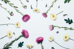 Guling-, lila- och blåttblommor på en vit bakgrund royaltyfria foton
