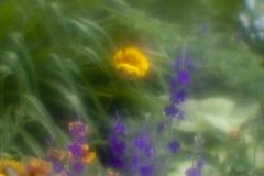 Guling- och blåttblommor Royaltyfria Foton